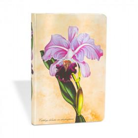 Carnet PAPERBLANKS non ligné - Mini 95×140mm - Plantes Peintes série Orchidée Brésilienne